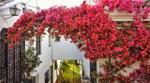 3 bedroom Townhouse for sale in Nueva Andalucía